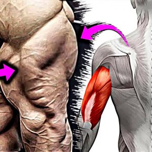 How To Build Your Triceps Fast (Dumbbell, Barbell, Bodyweight)