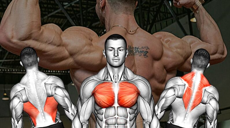 How To Build Back & Chest Muscles GYM Edition