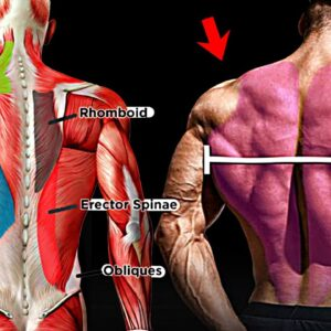How to Grow a Big Back - 11 Effective Exercise